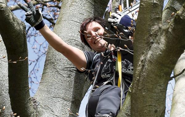 Klettergurt Baum : Baiersbronn in luftiger höhe geht es am mehliskopf von baum zu